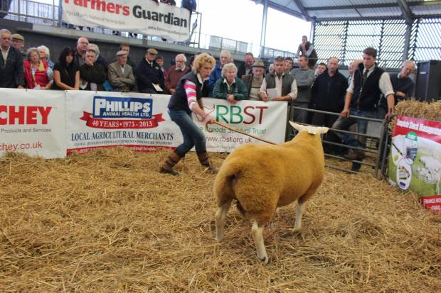 NSA Eastern Region Shearling Ram Sale 2016