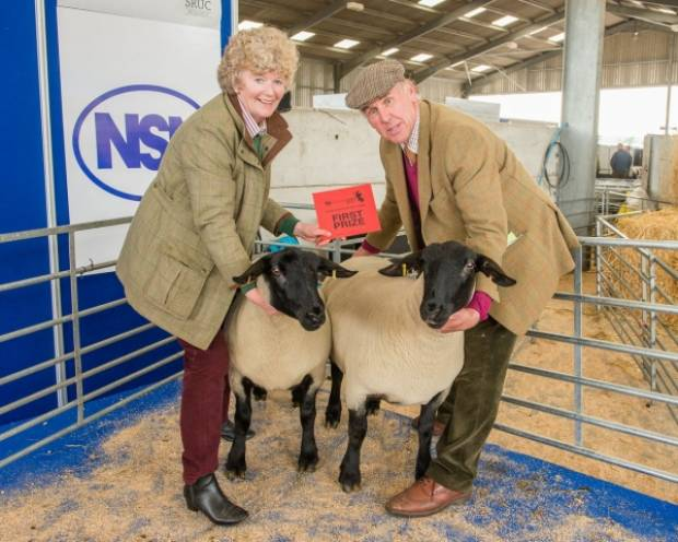 As in 2013, top price in the show and sale of ewe hoggs was secured by Irene and Jim Fowlie, Adziel, Strichen, Aberdeenshire, with a pair of Suffolks, which sold for 750gns each to A.C. Farms, Rutland, Leicester.