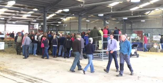 NSA Wales and Border Early Ram Sale
