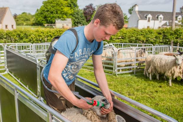 YOUNGSTERS INVITED TO TAKE PART IN NEXT GENERATION SHEPHERD OF THE YEAR COMPETITION