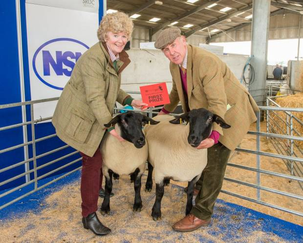 SHOW AND SALE OF EWE HOGGS A MAJOR FEATURE OF NSA HIGHLANDSHEEP