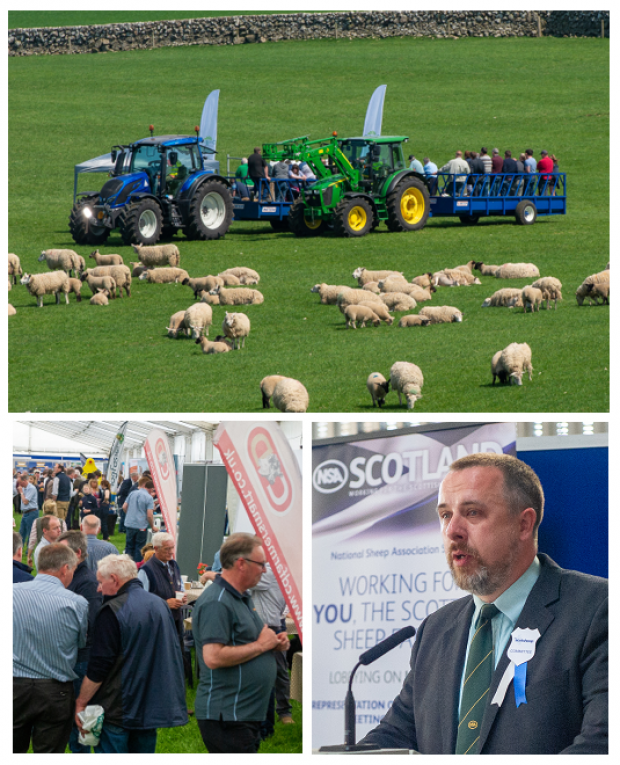 Crowds flock to fabulous host farm for NSA Scot Sheep 2018