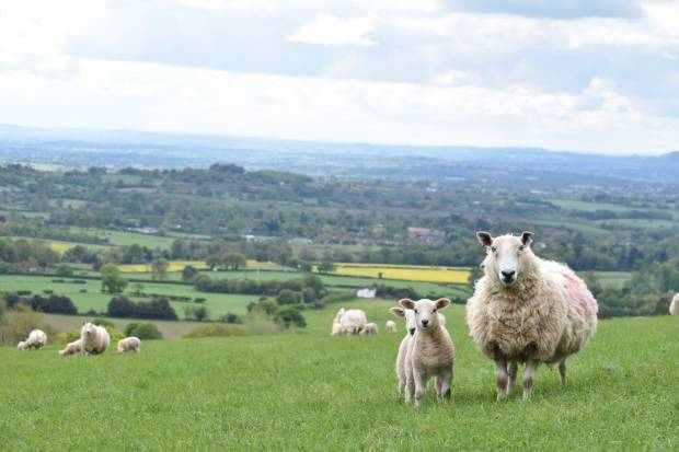 United message from sheep sector on use of newer wormer actives