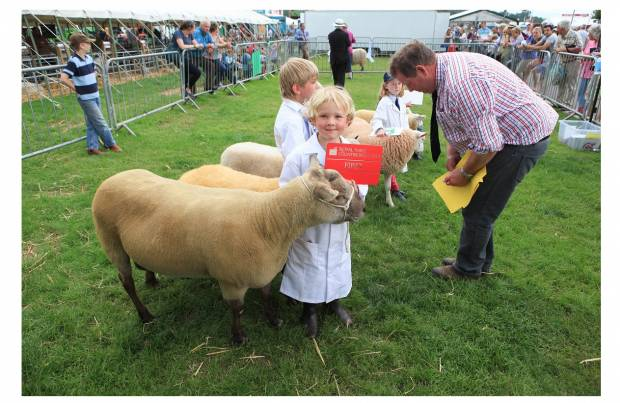 NSA Sheep Event supports aspiring young shepherds at Royal Three Counties Show
