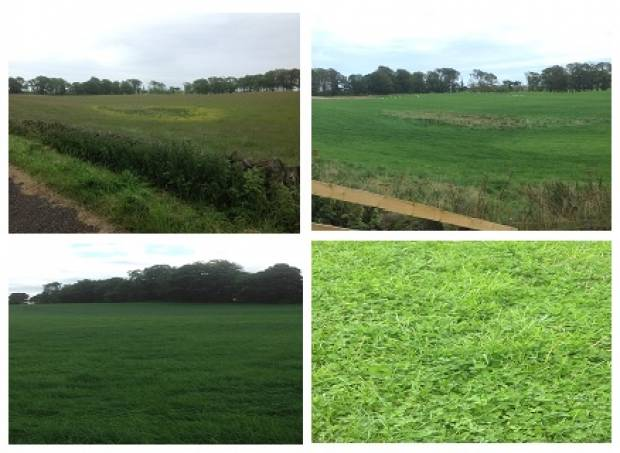 Top: Comparing a wet and rushy area in May 2013 (left) and September 2013 (right). Bottom: Good quality grassland in September 2013.