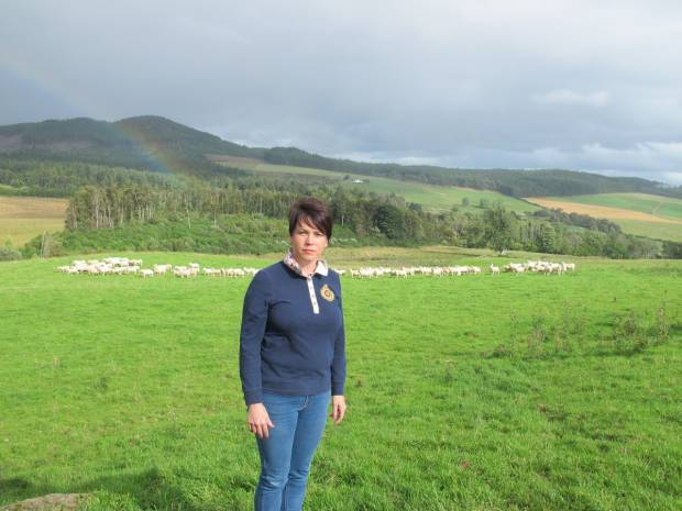 Harbro confirmed as major sponsor of NSA Highland Sheep 2017