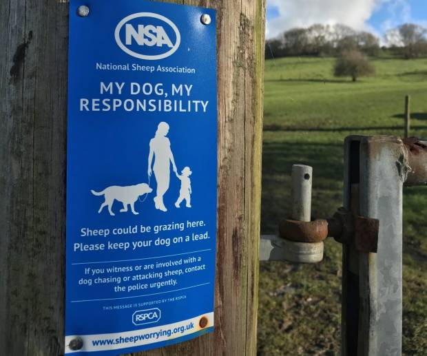 NSA and RSPCA unite to raise public awareness of sheep worrying by dogs