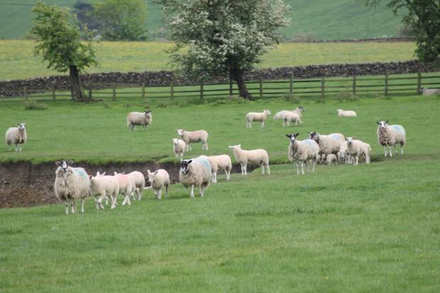 Developing a UK policy Framework for farming post-Brexit