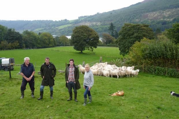 South Wales farm to host NSA Welsh Sheep 2017