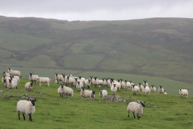 NSA Cymru / Wales Region welcomes future support pledge for agriculture in Wales