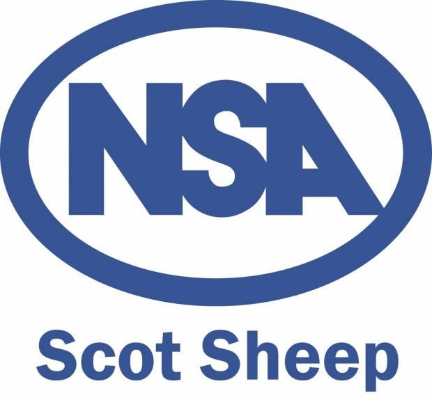 Opportunity for the younger generation to demonstrate their skills at NSA Scot Sheep 2016