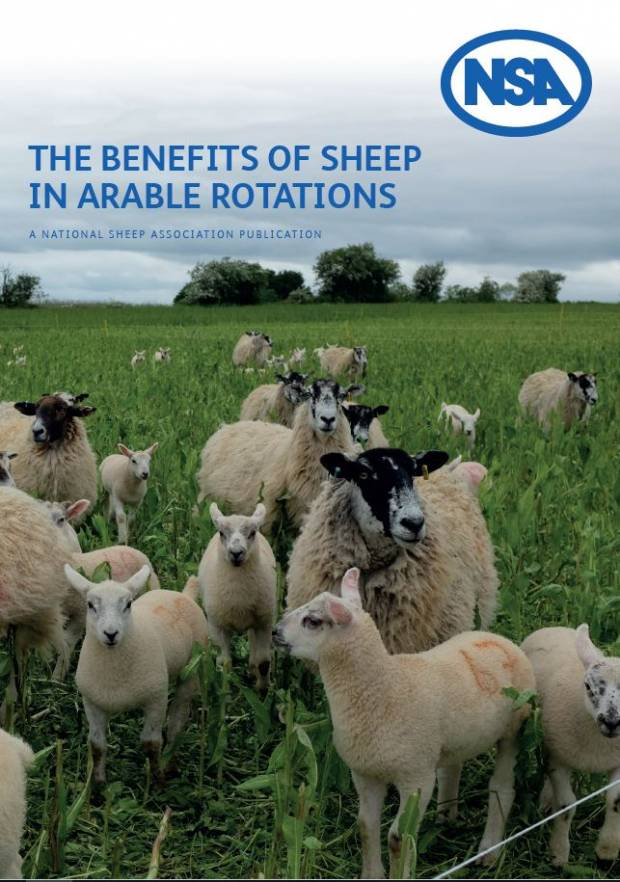 NSA report highlights benefits of introducing sheep into arable systems