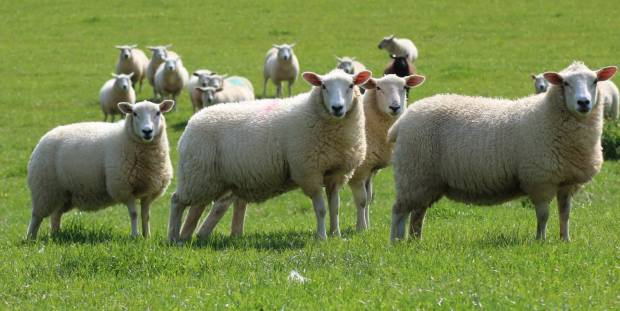 Funding for Scottish farmers welcomed ahead of difficult period