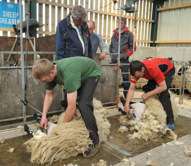 Preparation key to a successful shearing season