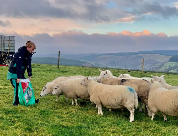 Young British wool enthusiast wins prize to help growing business