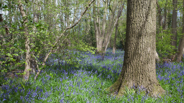 NSA responds to launch of series of actions in England protecting habitats and species on land