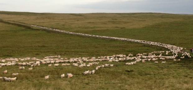 NSA Scottish Region reminds farmers to continue to follow Covid guidance