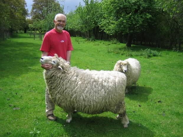 Arthur with his and Kate's two rams.