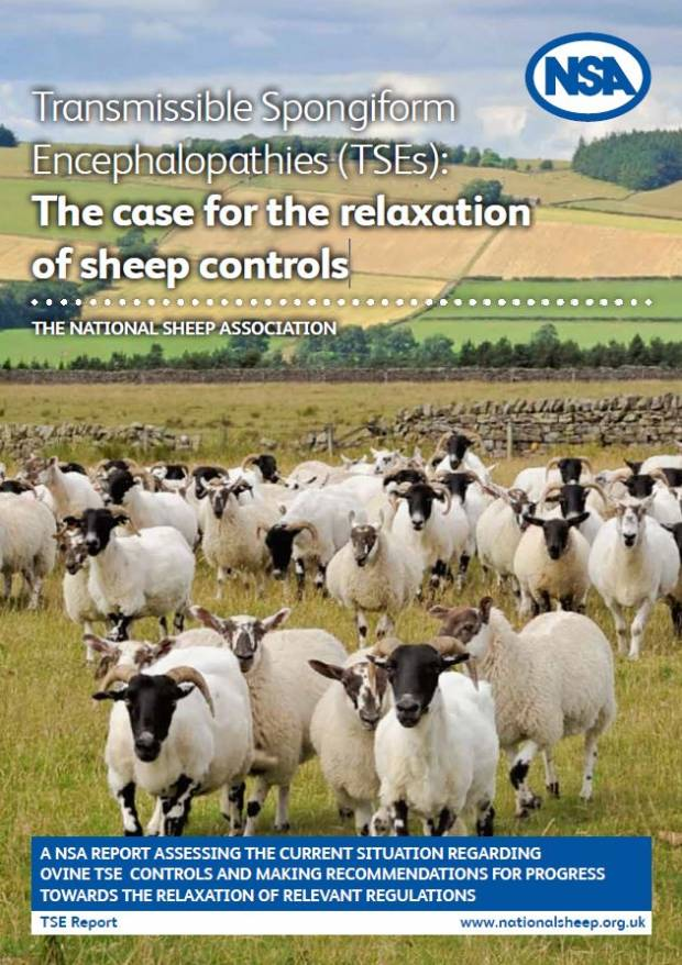Newly elected MEPs asked to address £23 million TSE burden on UK sheep sector