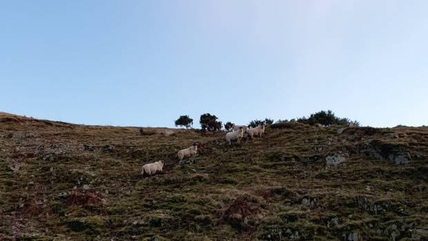 SCOTLAND'S POSITIVE SHEEP MARKET OUTLOOK