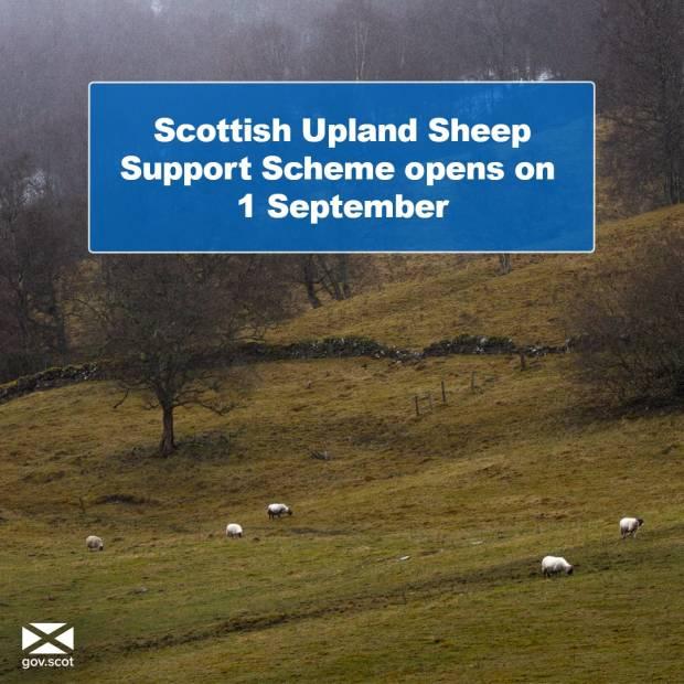 Scottish Upland Sheep Support Scheme Open 01 September