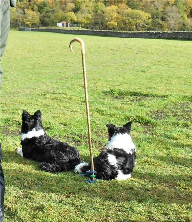 LEADING HANDLERS JOIN NSA SCOT SHEEP 2018 SHEEPDOG TRIAL