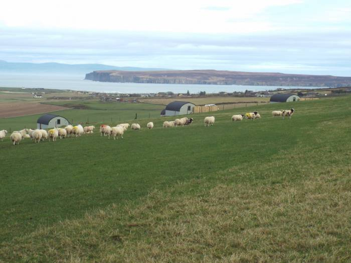 View from Sibmister farm looking onto Pentland Firth