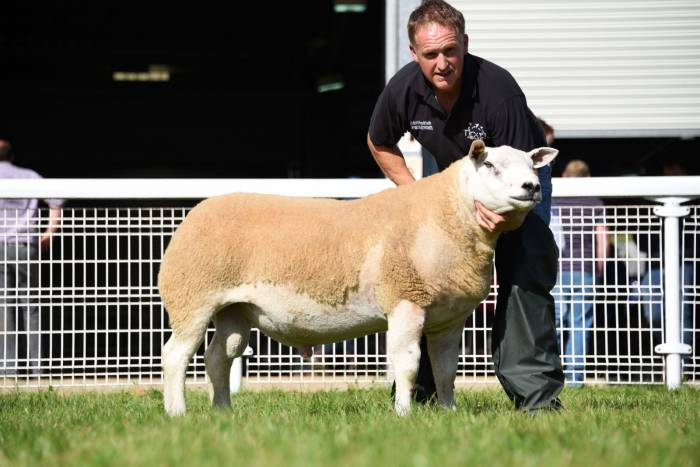Lot 2237 Highest price at 8000gns from Cefin Pryce.