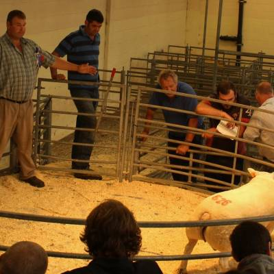 NSA South West Region Ram Sale 2016