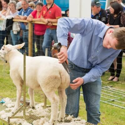 NSA Sheep Centre at Royal Highland Show