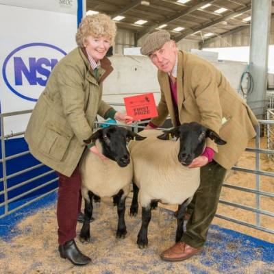 NSA Highland Sheep 2015