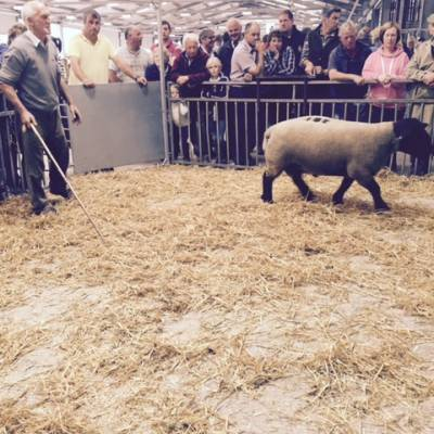 NSA Wales and Border Early Ram Sale 2015