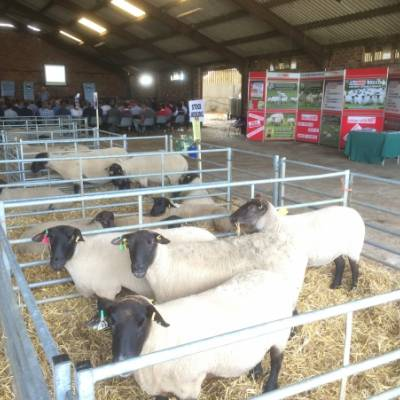 NSA Marches Region 'Rams: Sustainably and Profitably' discussion and farm walk