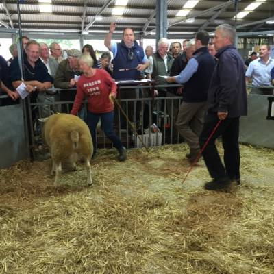 NSA Wales and Border Early Ram Sale 2016