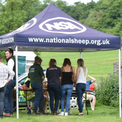 NSA South Sheep 2016