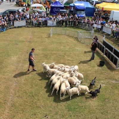 NSA Sheep 2016