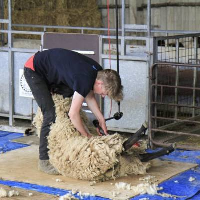 One entrant in the Shepherd of the Future Competition at NSA South Sheep 2014.