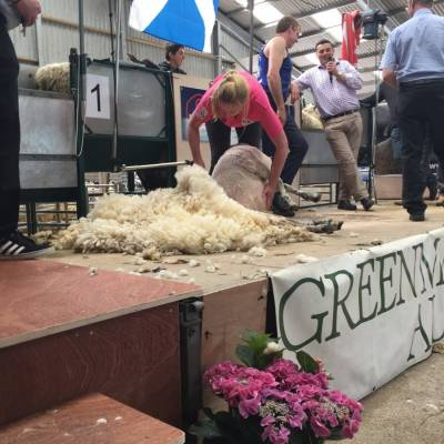 Shearing made up an element in the Young Shepherd competition at NSA Scot Sheep 2016.