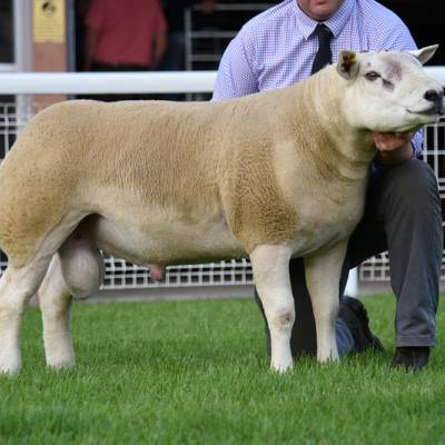LOt 3527 7,000gns from Mess J Watson & Co