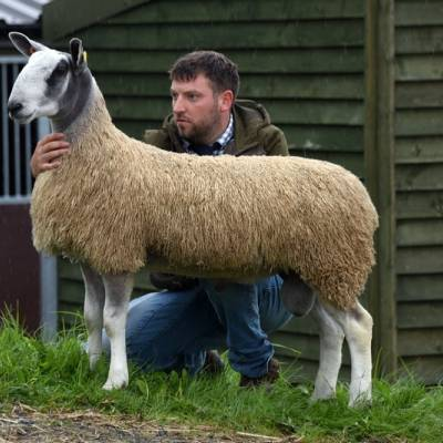 Lot 492 from Frank Johnson sold for 4,200gns
