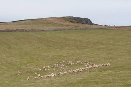 NSA South West Region Farm Walk