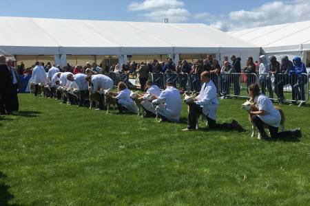 NSA Sheep Centre at Balmoral Show