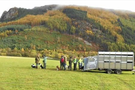 NSA Scottish Region Sheepdog training course 2