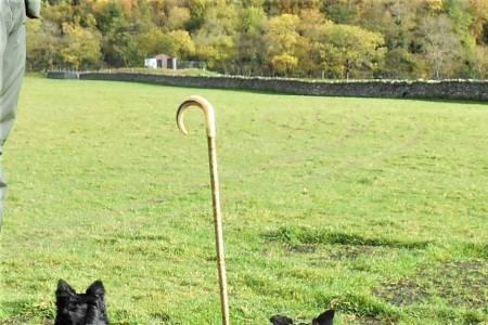 NSA Scottish Region and ISDS Sheepdog training course 1