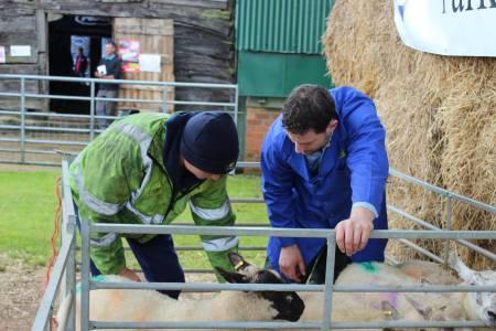 Next Generation Shepherds Training Day - NSA Marches Region