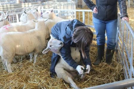 Farmer Workshop 2 - Reducing Sheep Lameness