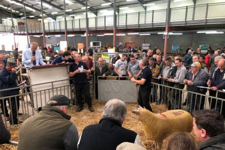 NSA Wales and Border main ram sale report
