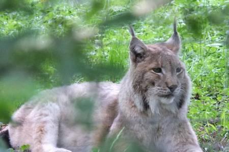 Farmers meeting on lynx rewilding