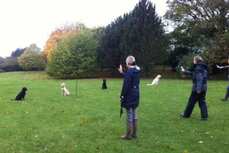 Top tips, training and further help for dog owners