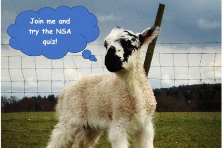 Test your sheep farming knowledge with NSA's quick quiz!